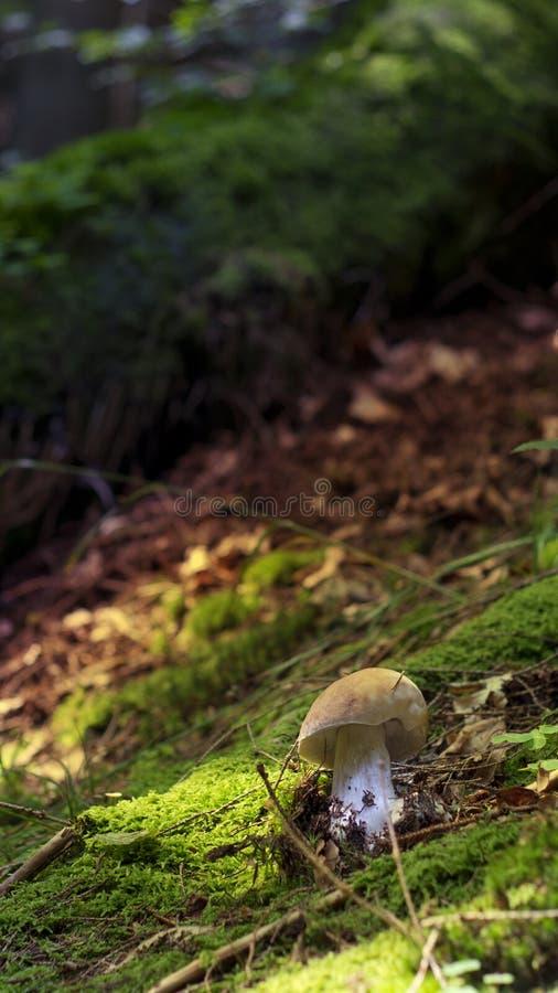 Kleiner Pilz allein lizenzfreie stockfotos