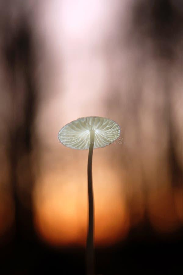 Kleiner Pilz im Abendwald lizenzfreie stockbilder