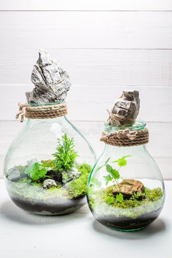Kleiner Regenwald in einem Glas mit Selbstökosystem stockfotografie