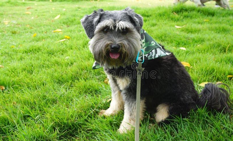 Kleiner schwarzer schöner Hund der Mischzucht stockbild