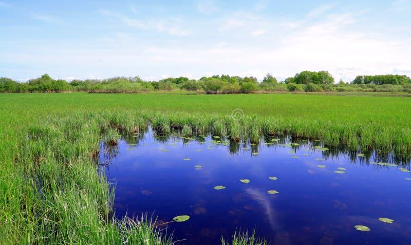 Kleiner See stockbild