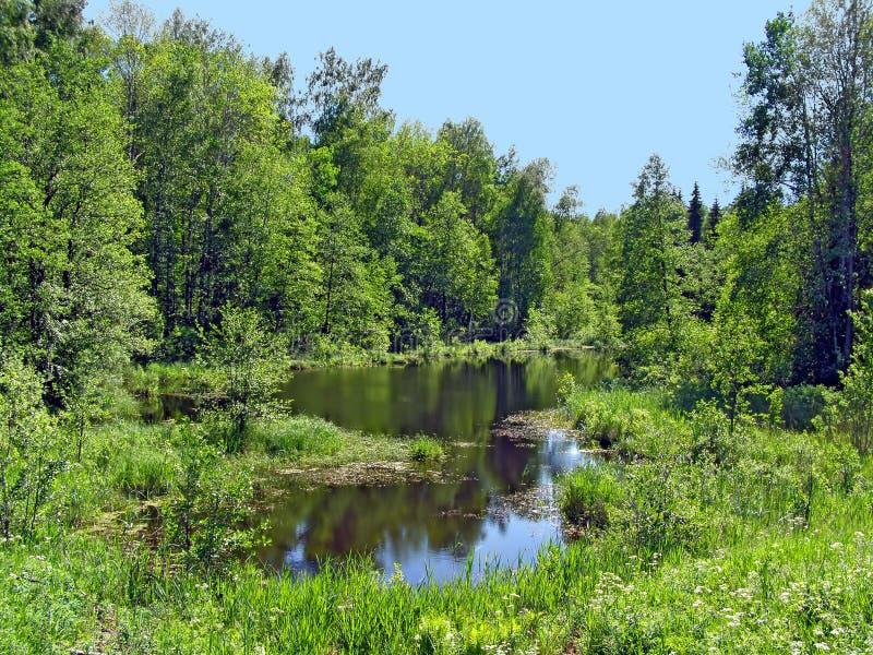 Kleiner See im Holz lizenzfreies stockbild