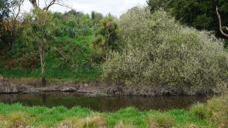 Kleiner See im Sumpf in Neuseeland lizenzfreies stockbild