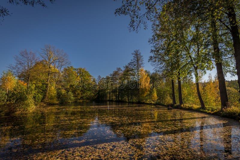 Kleiner See mit Bank voll von großen alten Bäumen mit bunten grünen und gelben Blättern, Herbst in Hochländern Tschechen Moravian stockfotografie