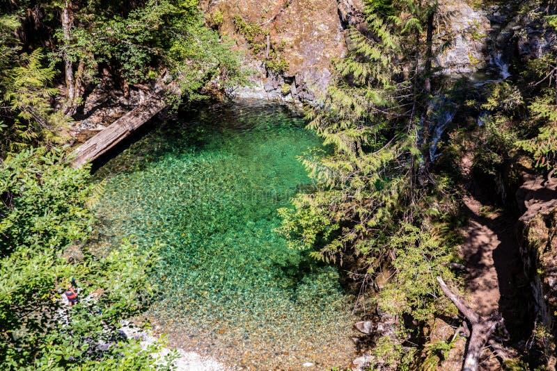 Kleiner Teich bei Opal Creek entlang Opal Pool-Spur lizenzfreie stockfotos