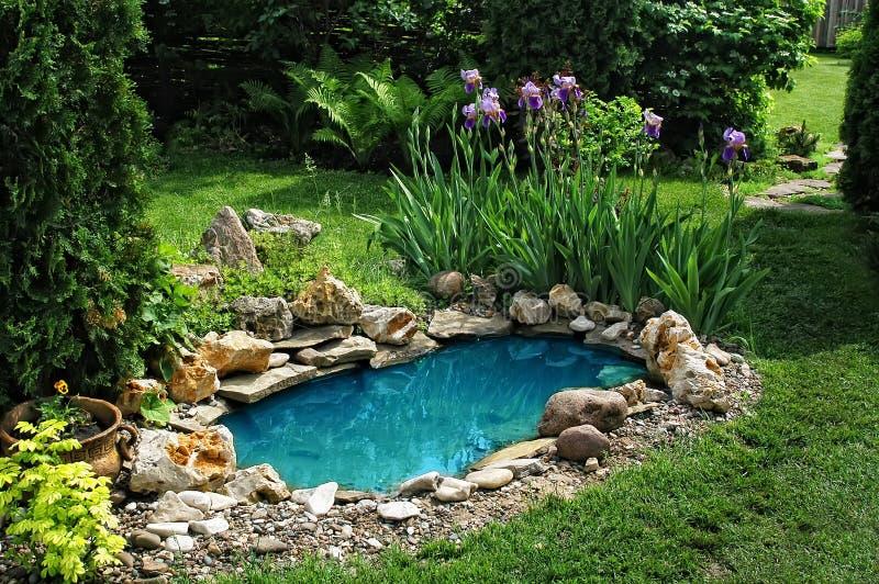 Kleiner Teich im Garten stockbild. Bild von landschaft - 15222425