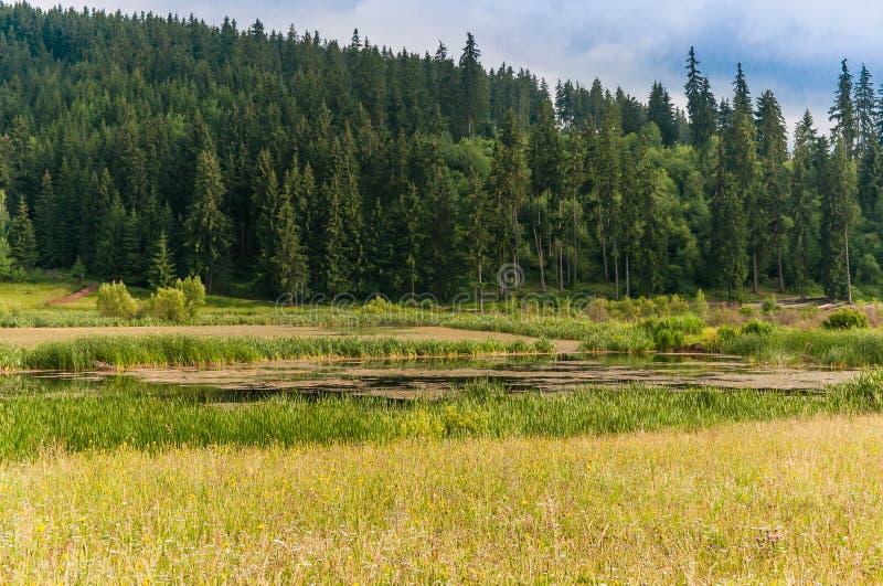 Kleiner Teich nahe Kiefernwald, Gras auf Vordergrund mit schönen wilden Blumen lizenzfreies stockfoto