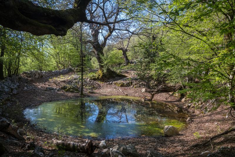 Kleiner Teich, Wasserentnahmestelle für Schafe im Frühjahr lizenzfreies stockbild