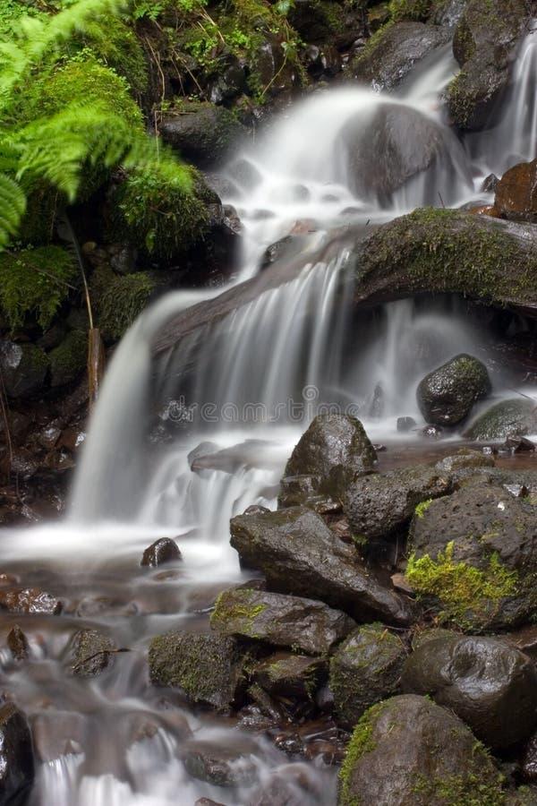 Kleiner tropischer Wasserfall. lizenzfreie stockfotos