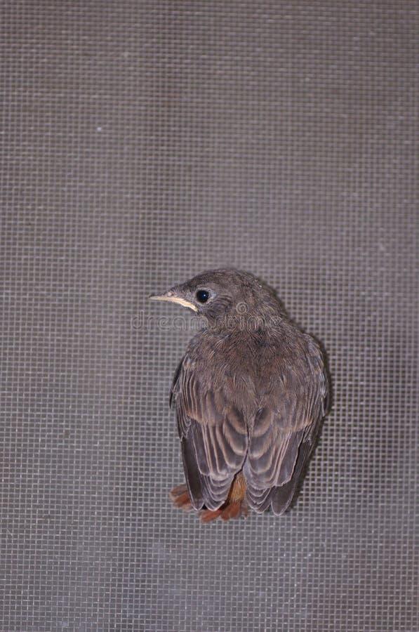 Kleiner Vogel stockbilder
