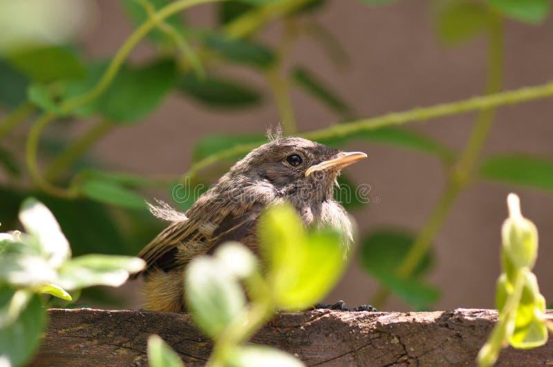 Kleiner Vogel lizenzfreie stockfotos