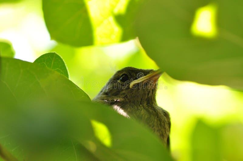 Kleiner Vogel lizenzfreie stockfotografie
