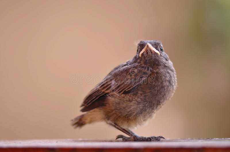 Kleiner Vogel lizenzfreie stockbilder