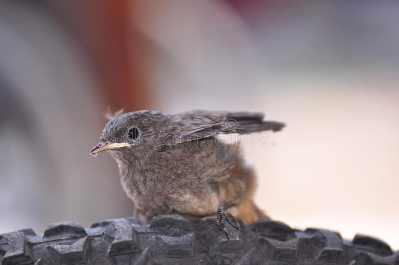 Kleiner Vogel lizenzfreies stockfoto