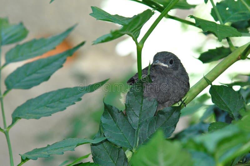 Kleiner Vogel stockfotos