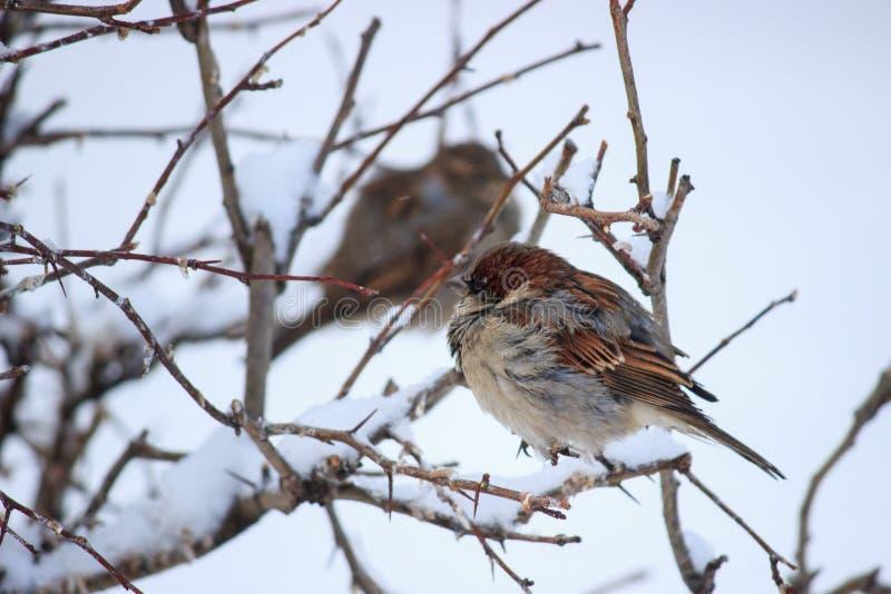 Kleiner Vogel, der in einem kühlen Wetter lebt stockfotografie