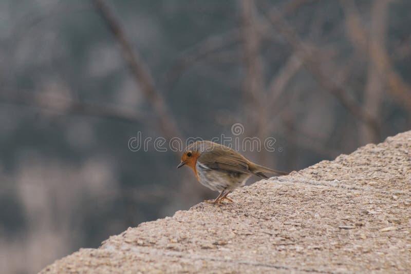 Kleiner Vogel, der hinunter den Wald schaut stockfotos