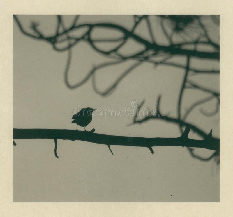 Kleiner Vogel durchgebrannt lizenzfreie abbildung
