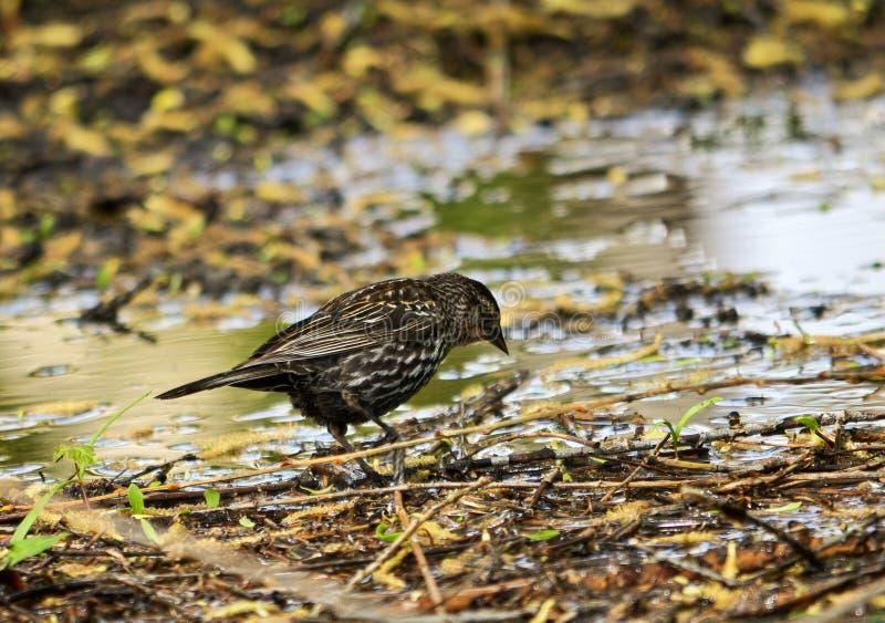 Kleiner Vogel in einem Teich stockfotos