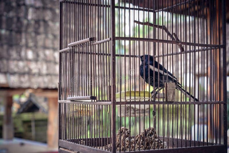 Kleiner Vogel im hölzernen Käfig lizenzfreies stockfoto