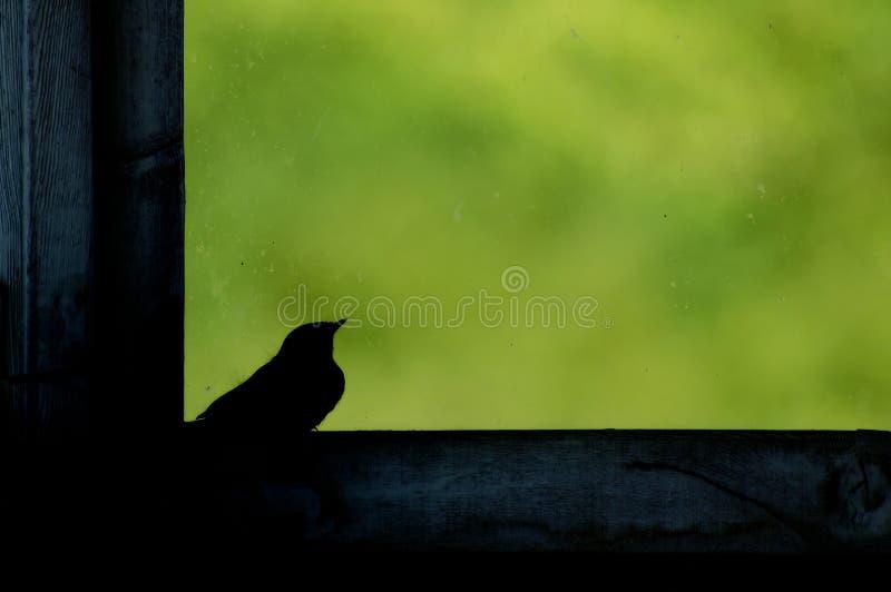 Kleiner Vogel im leeren Fensterrahmen mit grünem Hintergrund lizenzfreies stockbild