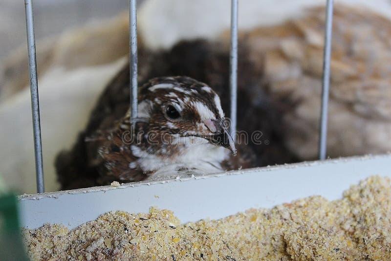 Kleiner Vogel schaut heraus von seinem Käfig lizenzfreies stockbild