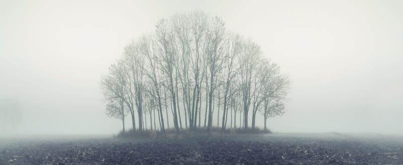 Kleiner Wald am nebeligen Tag des Herbstes stockfoto