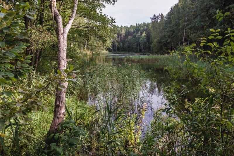 Kleiner Waldsee in Polen lizenzfreie stockfotografie