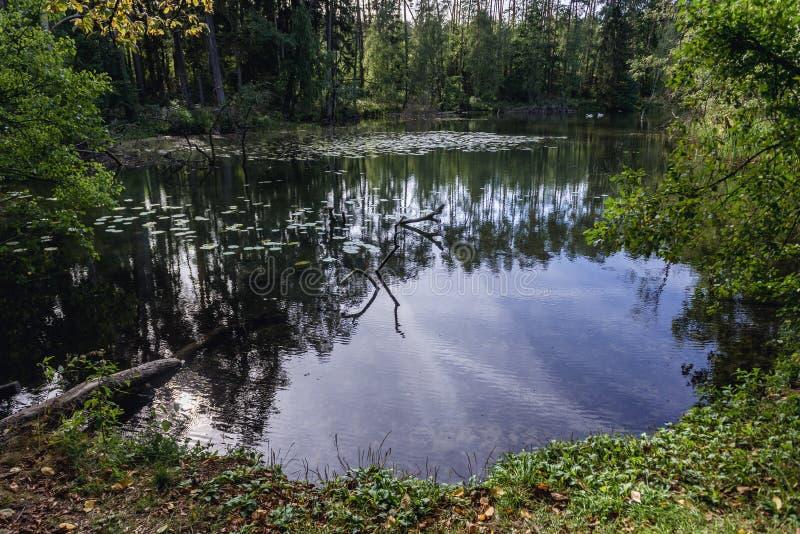 Kleiner Waldsee in Polen lizenzfreies stockbild