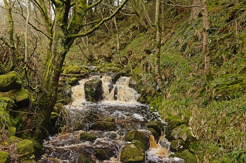 Kleiner Wasserfall in einem Wald in der irischen Landschaft stockfoto