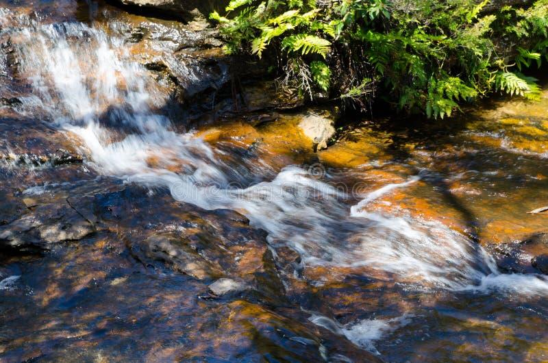Kleiner Wasserfall im Regenwald bei Wentworth Falls, New South Wales, Australien stockfotos