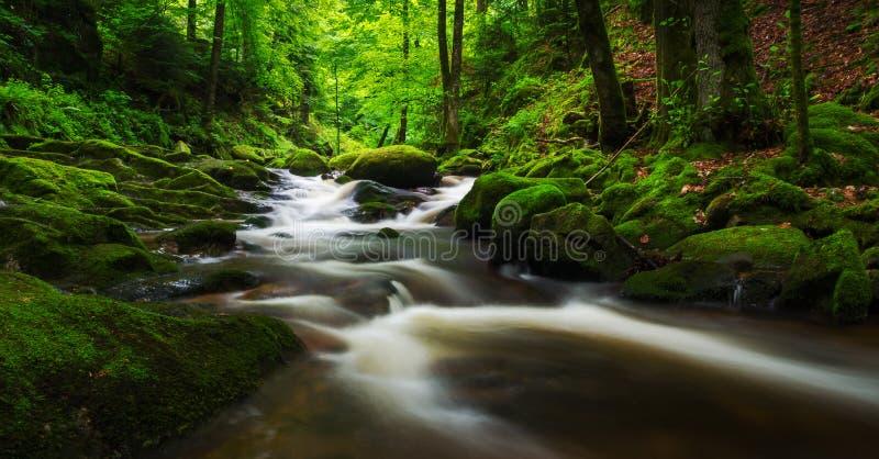 Kleiner Wasserfall im schwarzen Wald, Deutschland lizenzfreie stockfotos
