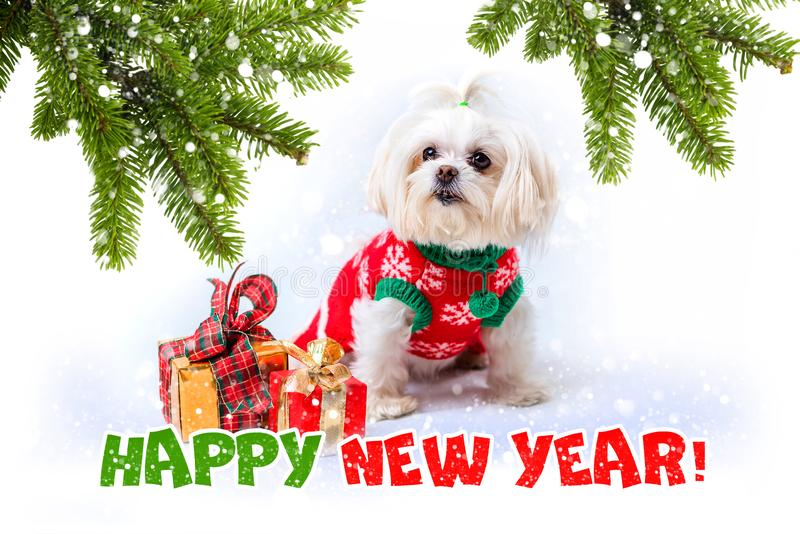 Kleiner wei?er Hund Gr??e des neuen Jahres lizenzfreies stockfoto