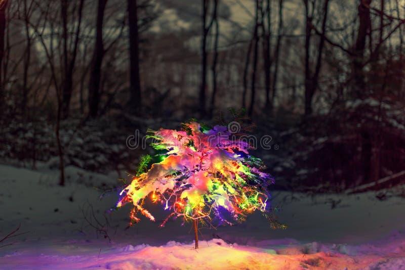 Kleiner Weihnachtsbaum mit Lichtern stockfotografie