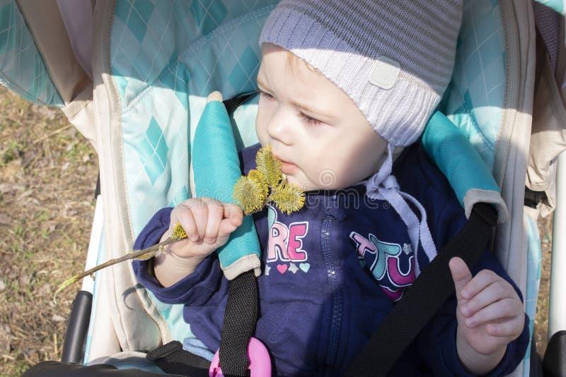 Kleines Baby 8 9 Monate M?dchenjunge schn?ffelt die Blumenknospen, die im Spazierg?nger sitzen Eine Kindererforschungsflora von B stockbild