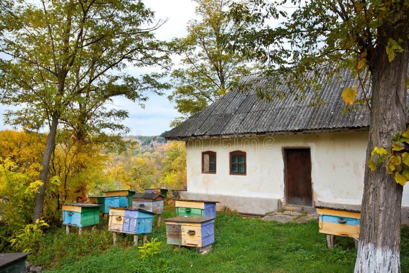 Kleines Bienenhaus mit bunten Bienenstöcken in einem Yard des alten Landhauses im ländlichen Gebiet, bewölkter Herbsttag, grüner  stockfotografie