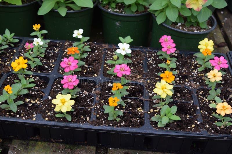 Kleines Blumenwachsen im Betriebsbehälter stockfotos