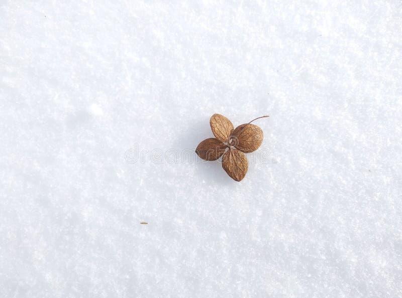 Kleines braunes Blatt auf weißem Schnee Hintergrund stockfotos