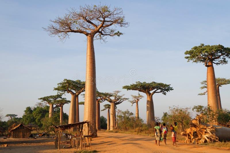 Kleines Dorf in der Gasse von Baobabs, Madagaskar lizenzfreies stockbild