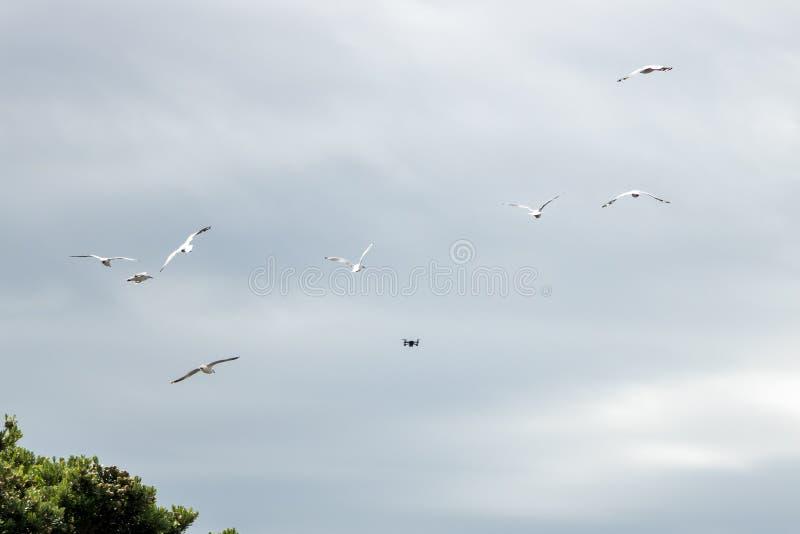 Kleines Drohne bedrängt durch Vögel lizenzfreie stockfotografie
