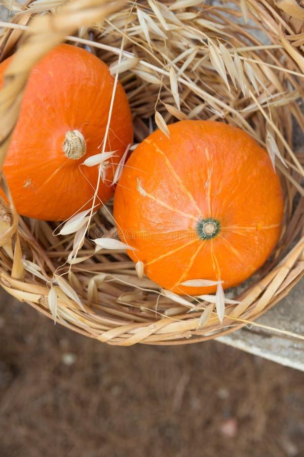 Kleines Erbstück rote Kuri Pumpkins der Leuchtorange-zwei in den Weidenkorb-wilden trockenen Hafern Autumn Fall Atmosphere Warme  stockfotografie