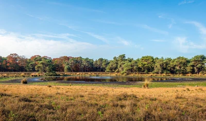 Kleines Fenn in einem niederländischen Naturreservat trocknete in großem Maße oben wegen der hartnäckigen Dürre stockbilder