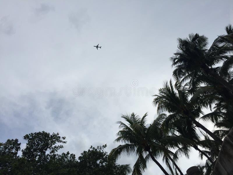 Kleines Flugzeugschattenbild im Himmel gestaltet durch Palmen und bewölkte Himmel lizenzfreie stockfotos