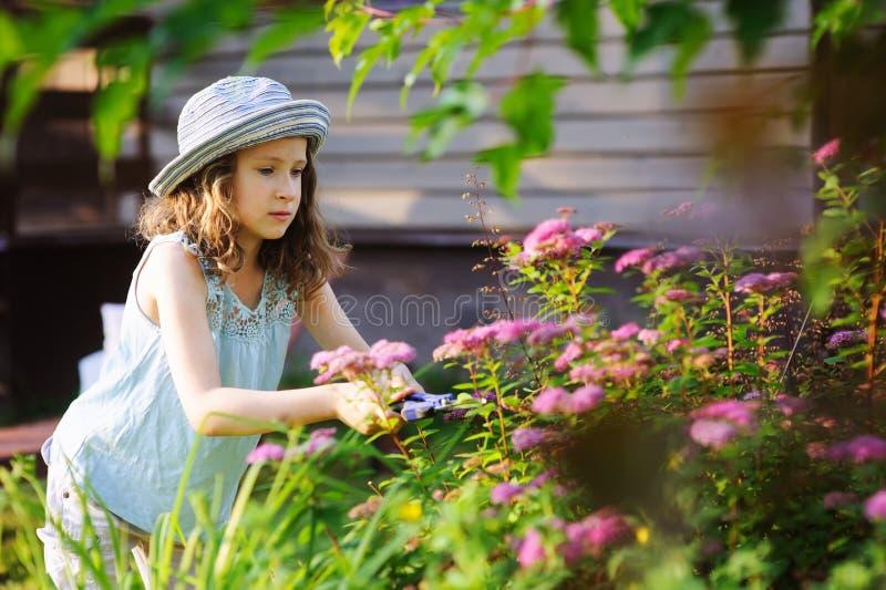 Kleines Gärtnerkindermädchen, das helfen zu trimmen und geschnittener spirea Busch im Sommergarten stockfotos