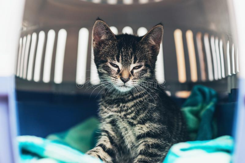 Kleines gestreiftes Kätzchen der getigerten Katze in einer Reisekiste lizenzfreies stockbild
