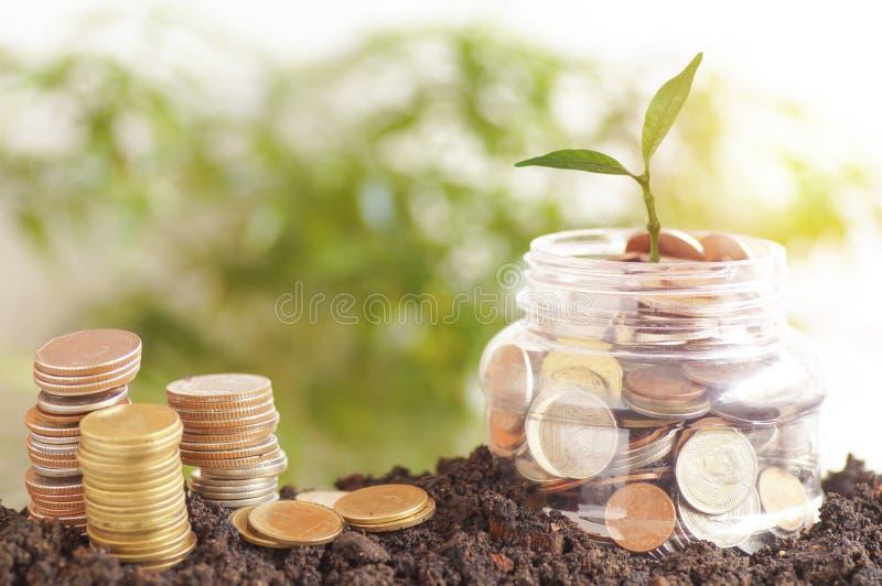 kleines grünes Baumwachstum oben auf Plastikgläsern und staced Geld auf Boden, stockfotos