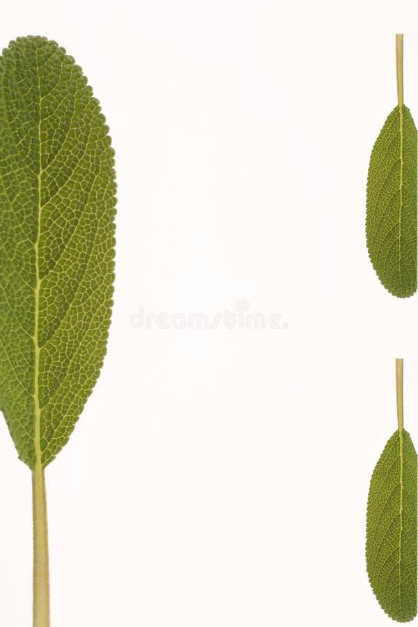 Kleines grünes Kraut stockfotos