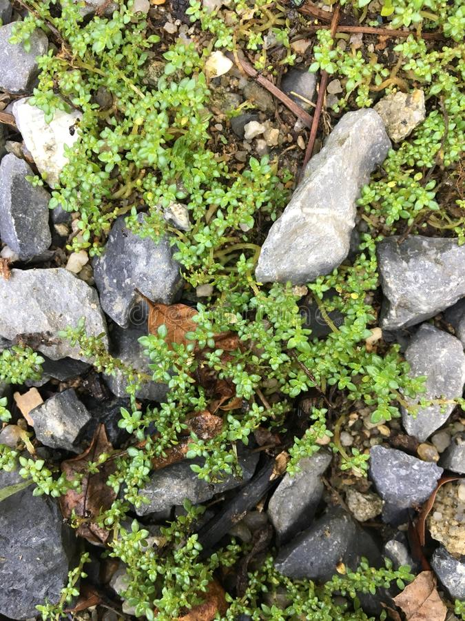 Kleines Gras stockbilder