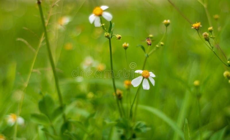 Kleines Gras stockfoto