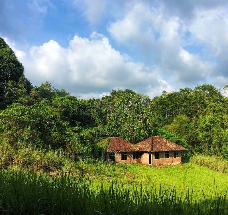 Kleines Haus auf den Reisgebieten Idyllische Sommerlandschaft mit grünem Feld und Wald unter blauem Himmel stockbild